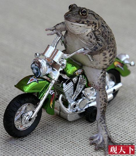 泰国神奇蟾蜍Oui会骑摩托车滑滑板插图2