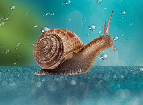 蜗牛是什么动物?蜗牛一般以什么为食?插图